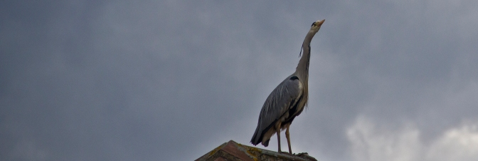 Heron & The Storm
