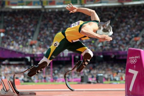 Cat Olympics Oscar Pistorius