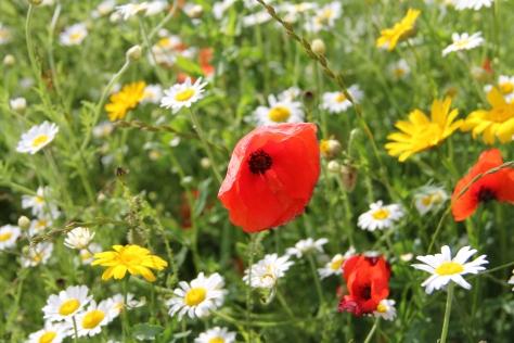 Leeds Poppies MilnersBlog 1