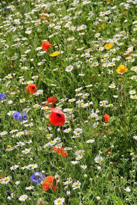 Leeds Poppies MilnersBlog 5