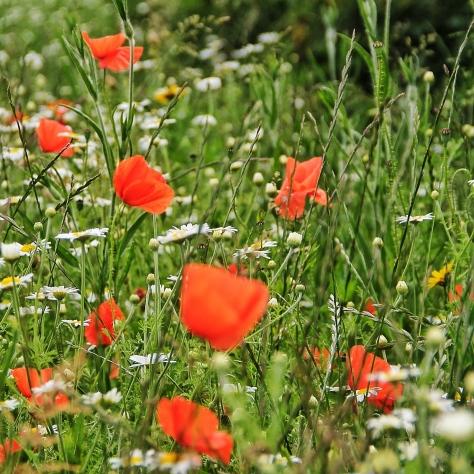 Leeds Poppies MilnersBlog 8