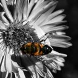 flowers on a black background 5 milnersblog