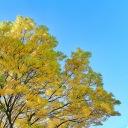 Autumn in Temple Newsam | Oct 2012