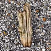 Estuary Drift Wood