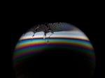 Planet Bubbles 03 ©Jason Tozer