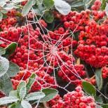 Frozen Web | Dec 2012