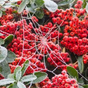 Frozen Web | Dec 2012