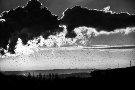 The Morning Flock