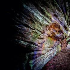 Rainbow Mutant Lichen
