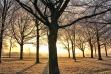 Ice Tree Sunrise