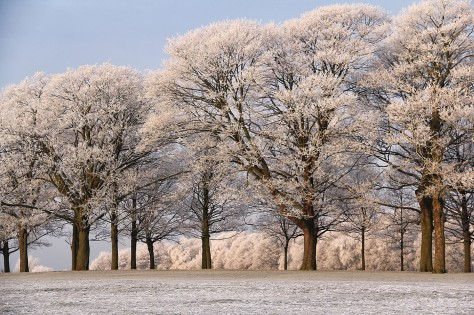 Winter Wonderland at Temple Newsam © Carl Milner