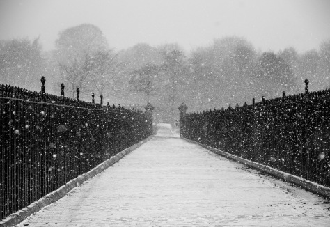 Blizzard in the Park ©Carl Milner Photography 2013  No 01