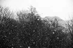 Flurry of Snow