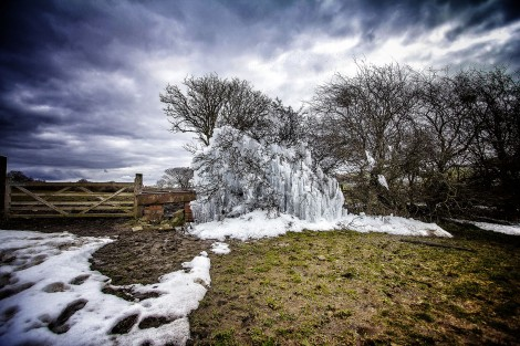 The Leeds Ice Tree