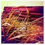 Funny coloured grass