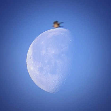 The early bird catches the ...Moon