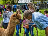 The Alpaca and Dr Dolittle at Kettlewell Mayfest © Carl Milner 2015